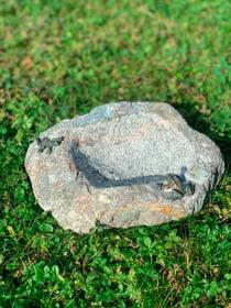 Frosch und Eidechse Vogeltränke 631389400000 Bild Nr. 1