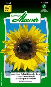Sonnenblume Einfachblüh. Riese Blumensamen Samen Mauser 650104106000 Inhalt 3 g (ca. 25 Pflanzen oder 2 - 3 m² ) Bild Nr. 1