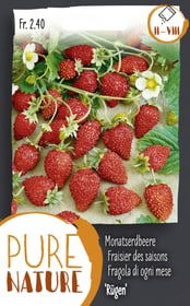 Monatserdbeere 'Rügen' 25g Gemüsesamen Do it + Garden 287116200000 Bild Nr. 1