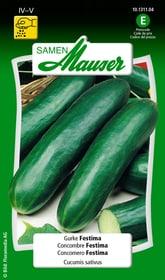 Cocomero Festima Sementi di verdura Samen Mauser 650110601000 Contenuto 1 g (ca. 10 - 15 piante o 3 - 4 m²) N. figura 1