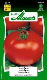Tomate Pyros Gemüsesamen Samen Mauser 650115704000 Inhalt 0.1 g (ca. 15 Pflanzen oder 5 m² ) Bild Nr. 1