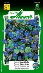 Phacelia Blaue Glocke Blumensamen Samen Mauser 650106301000 Inhalt 0.5 g (ca. 300 Pflanzen oder 3 - 5 m²) Bild Nr. 1