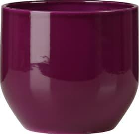 Cache-pot brillant Scheurich 657480400000 Couleur Violet Taille ø: 16.0 cm Photo no. 1