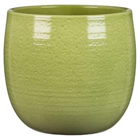 Keramik Übertopf Übertopf Scheurich 658717600015 Farbe Grün Grösse ø: 15.0 cm x L: 15.0 cm x B: 15.0 cm x T: 14.0 cm Bild Nr. 1