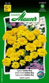 Tagetes Golden Boy Blumensamen Samen Mauser 650107504000 Inhalt 1 g (ca. 80 Pflanzen oder 5 - 6 m²) Bild Nr. 1