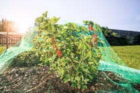 Filet protection contre oiseaux Aides de jardinage Windhager 631113300000 Photo no. 1