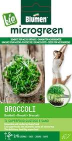 Micro ortaggi Broccoli 35g Sementi di gourmet Blumen 650242300000 N. figura 1