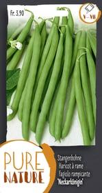 Fagiolo rampicante 'Neckarkönigin' 60g Sementi di verdura Do it + Garden 287107700000 N. figura 1
