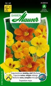 Kapuzinerkresse, niedrig, einf. Mischung Blumensamen Samen Mauser 650107805000 Inhalt 5 g (ca. 25 Pflanzen oder 3 m² ) Bild Nr. 1