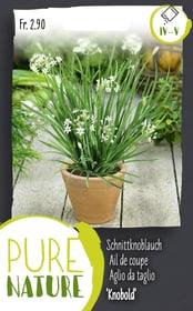 Schnittknoblauch 'Knobold' mehrjährig 1g Kräutersamen Do it + Garden 287121800000 Bild Nr. 1