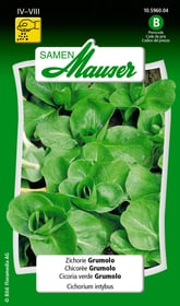 Zichorie Grumolo Gemüsesamen Samen Mauser 650116403000 Inhalt 5 g (ca. 3 m²) Bild Nr. 1