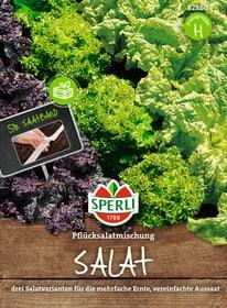 Pflücksalat auf Saatband Sementi di verdura Sperli 650165600000 N. figura 1