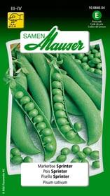 Markerbse Sprinter Gemüsesamen Samen Mauser 650112402000 Inhalt 80 g (ca. 6 - 7 m²) Bild Nr. 1
