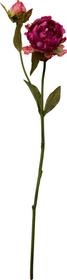 PAEONIA Plante artificielle 440775400000 Photo no. 1