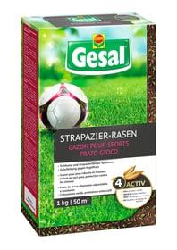 Strapazier-Rasen, 1 kg Rasensamen Compo Gesal 659211800000 Bild Nr. 1