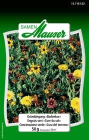 Gründüngung Bodenkur 50 g Blumensamen Samen Mauser 650117200000 Bild Nr. 1