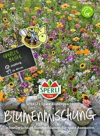 Sperli's Späte Blütenpracht Sementi di fiori Sperli 650178300000 N. figura 1