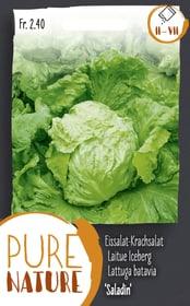Eissalat-Krachsalat 'Saladin' 1g Gemüsesamen Do it + Garden 287110800000 Bild Nr. 1