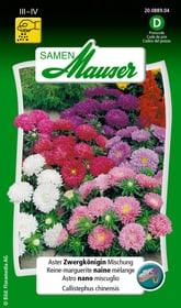 Aster Zwergkönigin Mischung Blumensamen Samen Mauser 650102004000 Inhalt 0.75 g (ca. 100 Pflanzen oder 5 - 6 m²) Bild Nr. 1