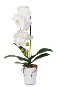 Kunstpflanze Phalaenopsis crème Do it + Garden 658955900000 Bild Nr. 1