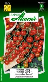 Tomate Sun Cherry F1 Gemüsesamen Samen Mauser 650115706000 Inhalt 30 Korn (ca. 10 m² ) Bild Nr. 1