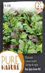 Pflücksalat 'Asia Spicy Green Mix' 5g Gemüsesamen Do it + Garden 287111100000 Bild Nr. 1