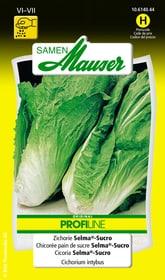 Zichorie Selma®-Sucro Gemüsesamen Samen Mauser 650116405000 Inhalt 1.5 g (ca. 300 Pflanzen oder 6 - 8 m² ) Bild Nr. 1