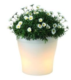 Beleuchteter Blumentopf 42051080000008 Bild Nr. 1
