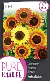 Sonnenblume 'Herbstschönheit' Mix 2.5g Blumensamen Do it + Garden 287303300000 Bild Nr. 1