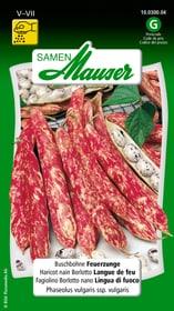 Fagiolino Borlotto nano Lingua di fuoco Sementi di verdura Samen Mauser 650109302000 Contenuto 80 g (ca. 8 m² ) N. figura 1