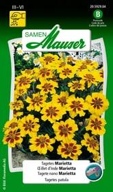 OEillet d'Inde Marietta Semences de fleurs Samen Mauser 650107507000 Contenu 1 g (env. 80 plantes ou 5 - 6 m²) Photo no. 1