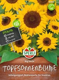 Sonnenblume Big Smile Gemüsesamen Sperli 650156000000 Bild Nr. 1