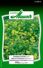 Gründüngung kurzfristig 250 g Blumensamen Samen Mauser 650117400000 Bild Nr. 1