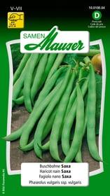 Buschbohne Saxa Gemüsesamen Samen Mauser 650109305000 Inhalt 80 g (ca. 8 m²) Bild Nr. 1