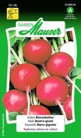 Radies Riesenbutter Gemüsesamen Samen Mauser 650113603000 Inhalt 5 g (ca. 300 - 400 Pflanzen oder 3 m²) Bild Nr. 1