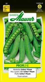 Markerbse Selma-Pisum Gemüsesamen Samen Mauser 650112401000 Inhalt 80 g (ca. 6 - 7 m²) Bild Nr. 1