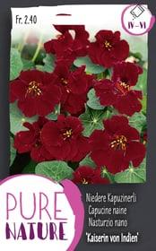 Capucine naine 'Impératirice des Indes', Semences de fleurs Do it + Garden 287304200000 Photo no. 1
