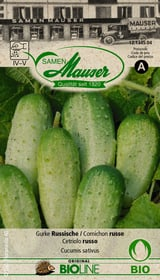 Cetriolo russo Sementi di verdura Samen Mauser 650244900000 N. figura 1
