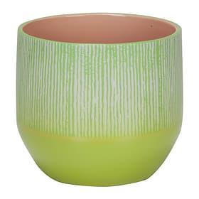 Übertopf Seagrass 820/14 Scheurich 657556800014 Grösse L: 13.8 cm x B: 13.8 cm x H: 12.8 cm Farbe Grün Bild Nr. 1