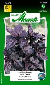 Basilic Osmin Semences d'herbes arom. Samen Mauser 650108705000 Contenu 2.5 g (env. 5 m²) Photo no. 1