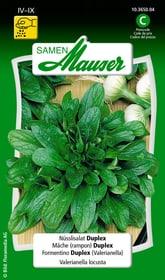 Nüsslisalat Duplex Gemüsesamen Samen Mauser 650112802000 Inhalt 5 g (ca. 1 - 2 m² ) Bild Nr. 1