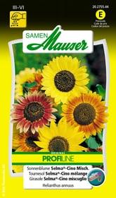 Sonnenblume Selma®-Cino Misch. Blumensamen Samen Mauser 650104103000 Inhalt 2 g (ca. 30 - 40 Pflanzen oder 3 - 4 m² ) Bild Nr. 1