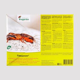 Carponem nématodes contre les courtilières, 50–100m² Organismes utiles Andermatt Biogarten 658517900000 Photo no. 1