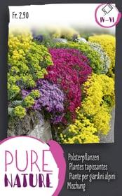Polsterpflanzenmischung 0.5g Blumensamen Do it + Garden 287305700000 Bild Nr. 1