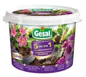 5 en 1 Engrais pour plantes, 1.5 kg Compo Gesal 658236400000 Photo no. 1
