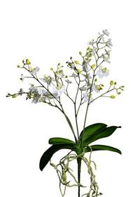 Orchidee Kunstblume 657353200000 Bild Nr. 1