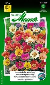Portulak einfach Mischung Blumensamen Samen Mauser 650106601000 Inhalt 0.75 g (ca. 80 Pflanzen oder 4 m²) Bild Nr. 1