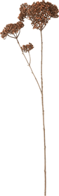 SKIMMIAZWEIG Kunstpflanze 444956900000 Bild Nr. 1