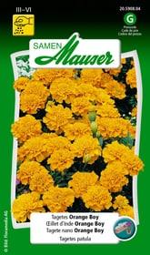 Tagetes Orange Boy Blumensamen Samen Mauser 650107508000 Inhalt 1 g (ca. 80 Pflanzen oder 5 - 6 m²) Bild Nr. 1