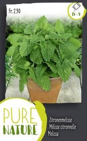 Melissa, perenne 1g Sementi di erbe Do it + Garden 287122100000 N. figura 1